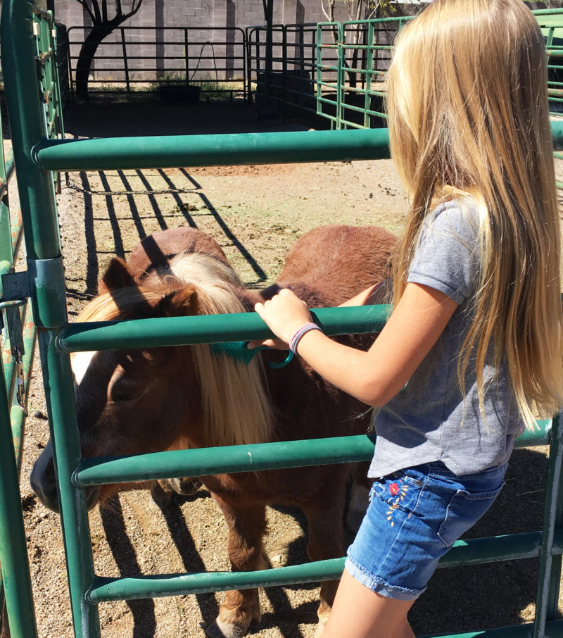 Brushing pony\\'s mane