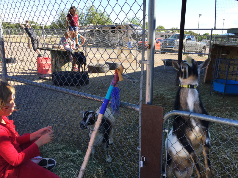 Petting Zoo with Goats